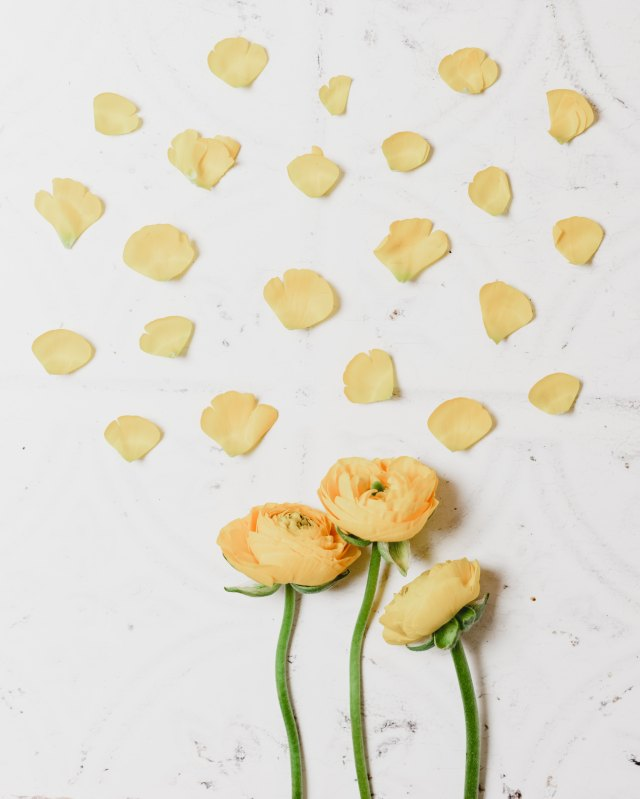 renoncules slow flower