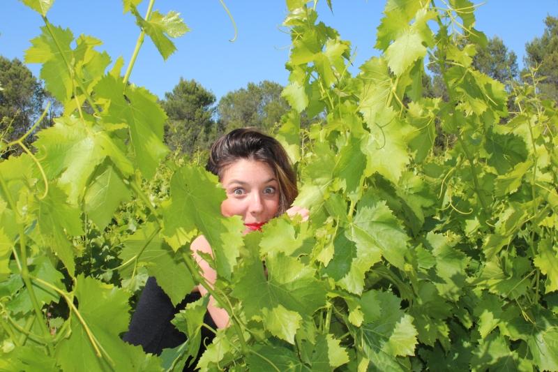 Camille et son regard maliciaux dans une vigne du languedoc occitanie. le soleil promet une belle recolte
